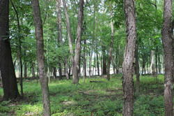 Wooded Grounds