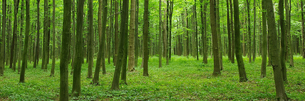 Spacebel joining hands with Wuudis Solution Oy to spread forestry services in Europe and beyond