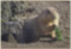 Screen Shot 2020-02-01 at 5.12.43 PM.png