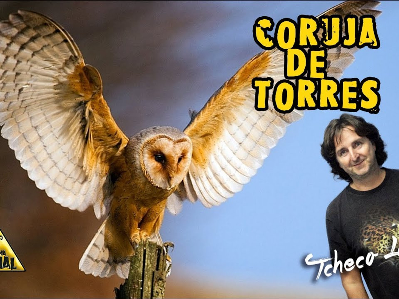 Coruja de Torres