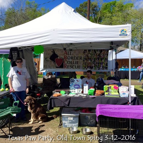 Texas Paw Party, Old Town Sping 3-12-2016.jpg