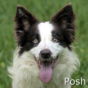 Posh_TN2.jpg