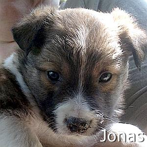Jonas_TN.jpg