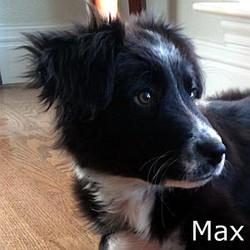Max3_TN.jpg