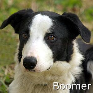 Boomer_TN.jpg