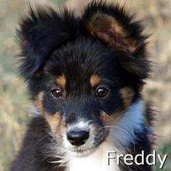 Freddy_TN.jpg
