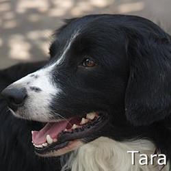 Tara_TN.jpg
