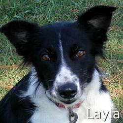 Layla_TN.jpg