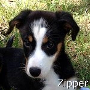 Zipper_TN.jpg