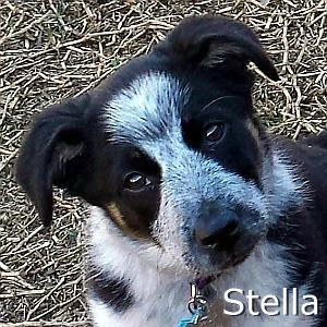 Stella2_TN.jpg
