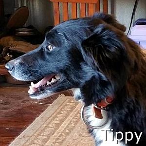 Tippy-TN