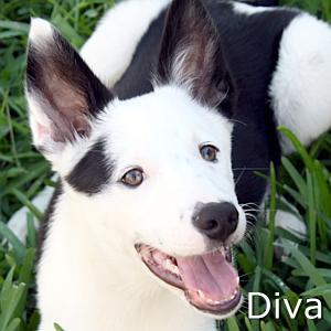 Diva_TN.jpg