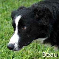 Beau_TN.jpg