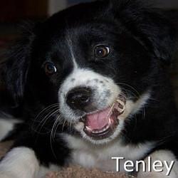 Tenley_TN.jpg