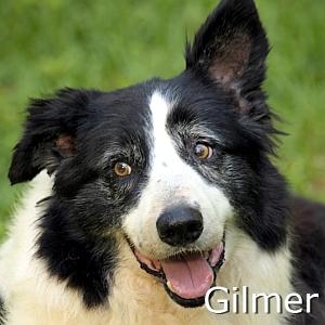 Gilmert_TN.jpg