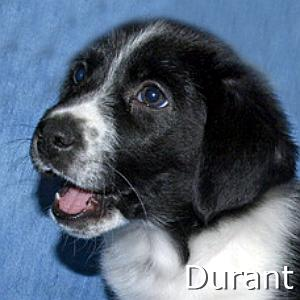 Durant_TN.jpg