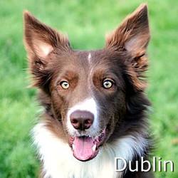 Dublin_TN1.jpg