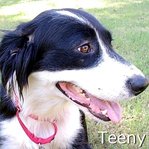 Teeny-TN.jpg