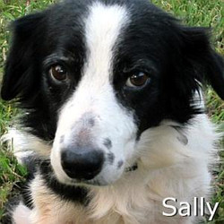 Sally_TN.jpg