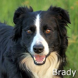 Brady_TN.jpg