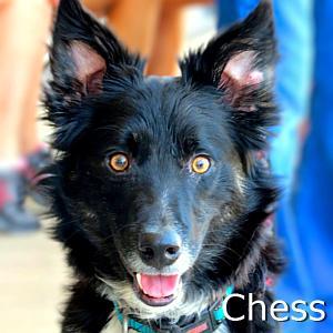 Chess_TN01.jpg