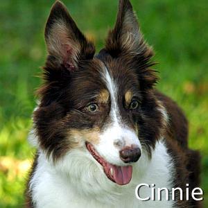 Cinnie_TN.jpg