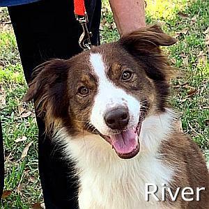 River-TN.jpg