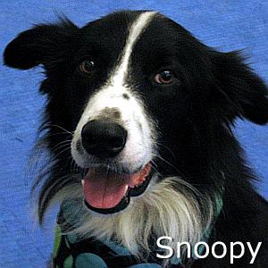 Snoopy_TN.jpg