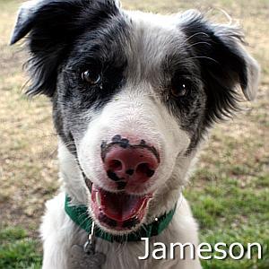 Jameson_TN.jpg