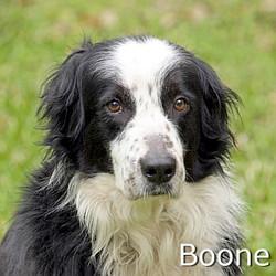 Boone_TN