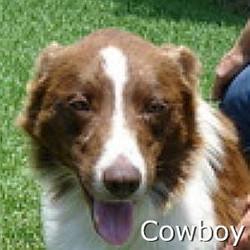 Cowboy_TN.jpg