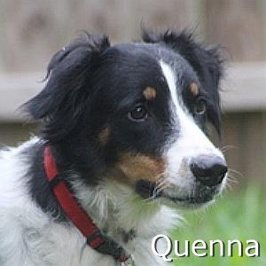 Quenna--TN.jpg