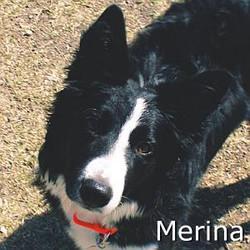 Merina_TN.jpg