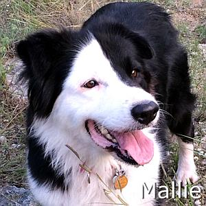 Mallie_TN01.jpg