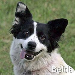 Belda_TN2.jpg