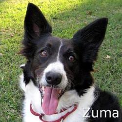 Zuma_TN.jpg