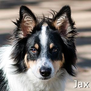 Jax_TN
