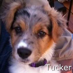 Tucker_TN.jpg