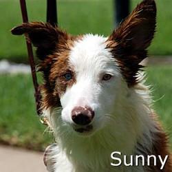 Sunny2_TN.jpg
