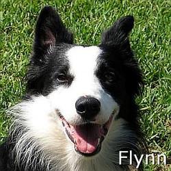 Flynn_TN_New.jpg