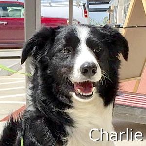 Charlie-TN