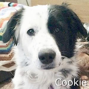 Cookie_TN.jpg