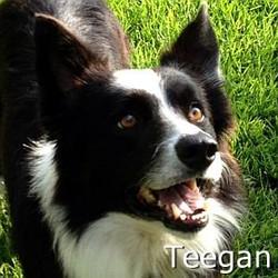 Teegan_TN.jpg