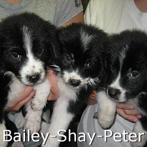 Bailey_Shay_Peter_TN.jpg
