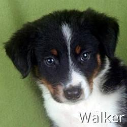 Walker_TN.jpg