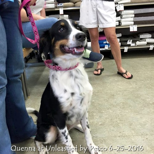 Quenna at Unleashed by Petco 6-25-2016.jpg