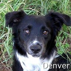 Denver_TN.jpg