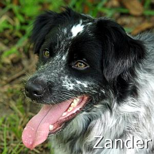 Zander1_TN_New01.jpg