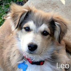 Leo_TN.jpg