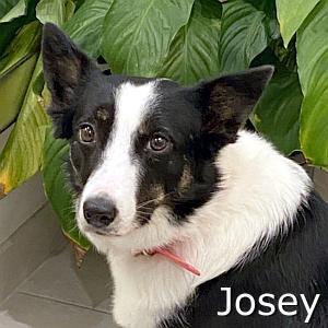Josey-TN.jpg